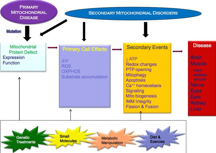 Primary mitochondrial disease versus secondary mitochondrial disorders. Source: Bruce Cohen, MD, Akron Children's Hospital. Modified from Mechanism of Disease: Monogenic Mitochondrial Disorders. N Engl J Med 2012; 366:1132-1141. Available at http://www.nejm.org/doi/full/10.1056/NEJMra1012478 [4].