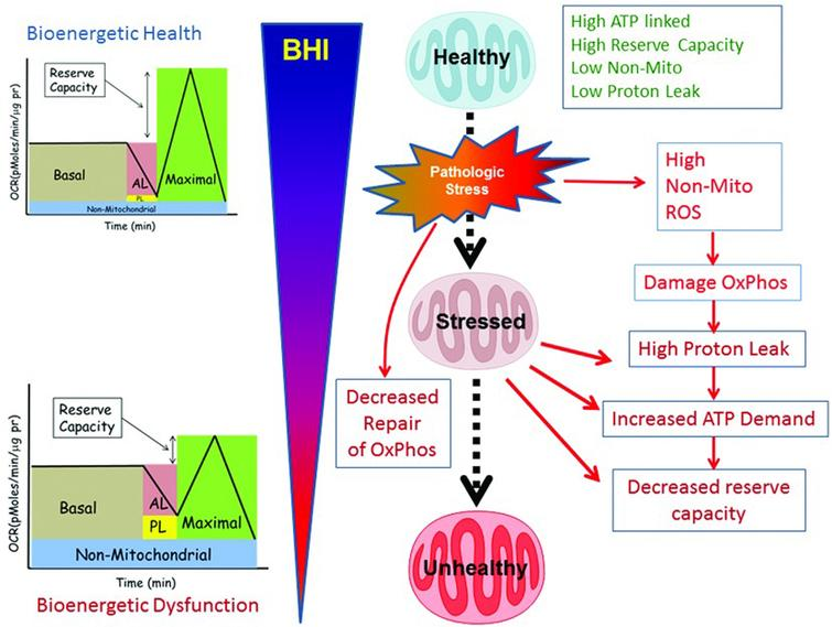 BHI as a dynamic measure of the response of the body to stress. Source: Chacko BK, Kramer PA, Ravi S, et al. The Bioenergetic Health Index: A new concept in mitochondrial translational research. Clin Sci (Lond). 2014;127(pt 6):367-373. Available at http://www.clinsci.org/content/127/6/367/.