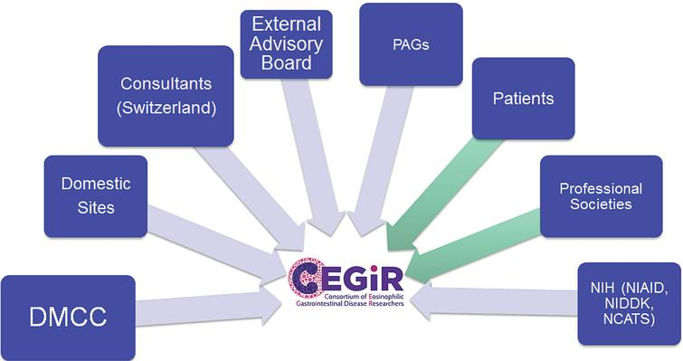 CEGIR Emblem: The C is in the shape of a nucleus of an eosinophil, which defines this group of disorders.