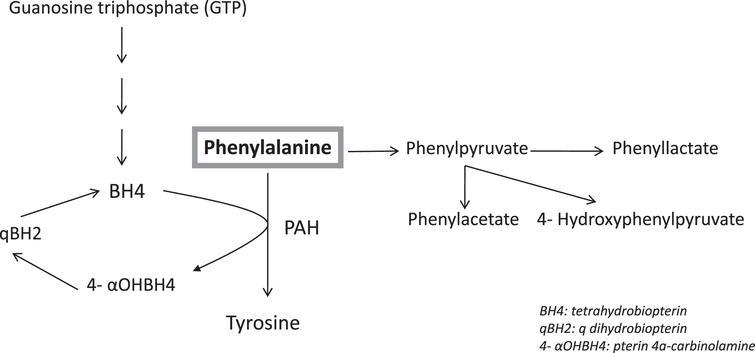 Metabolic Pathway of Phenylalanine.