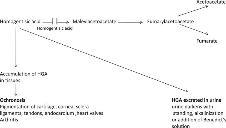 Alkaptonuria-Metabolic Pathway.