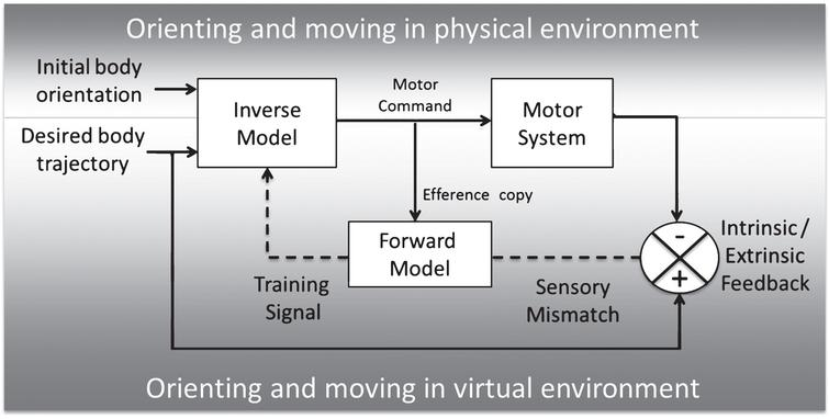 Model of forward and inverse learning in physical and virtual environments, adapted from Miall and Wolpert [25].